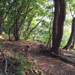 心を正しい位置に戻そう。下見レポ6/4(土)「ハーブ王子と森の歌会」