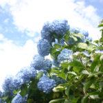 【東京】アジサイと雨の美しさを知る★6/23(木)「森の歌会 アジサイ山の歌」@あきる野市