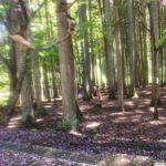 ナイトウォーク、暗闇と仲良くなる方法。レポート「親子キャンプ〜森の歌会プログラム」@埼玉名栗げんきプラザ