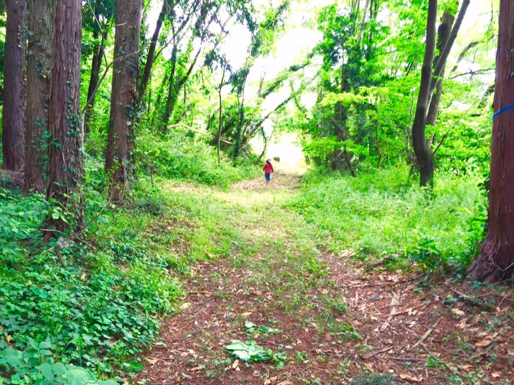 居心地の良い古い森