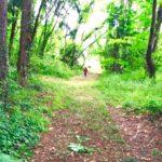 下見レポ「山梨の癒しの森 森のおんがくたいで行こう!」