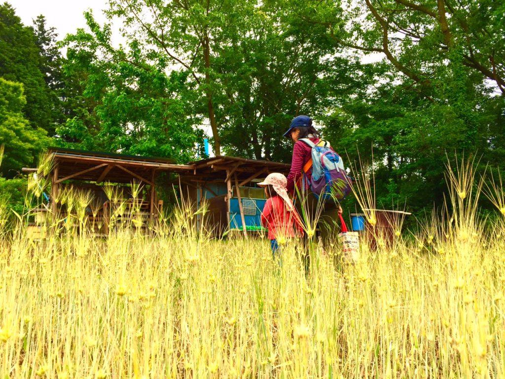 麦畑と管理小屋