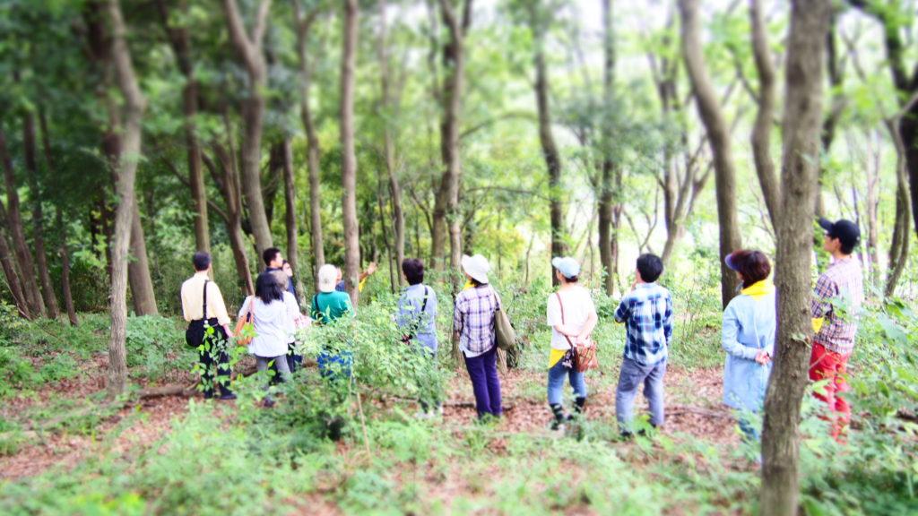 森のガイド1