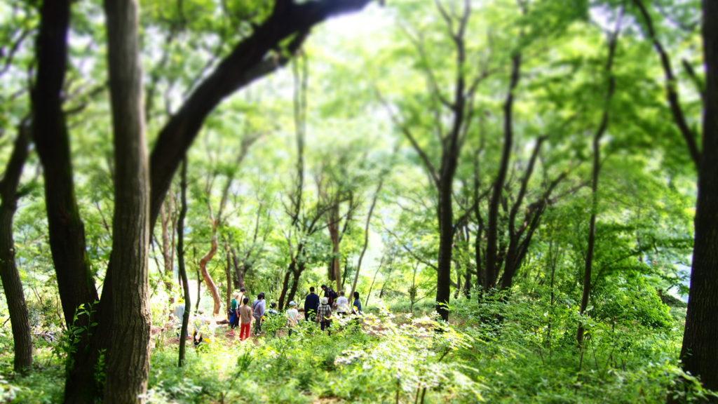 森のガイド2