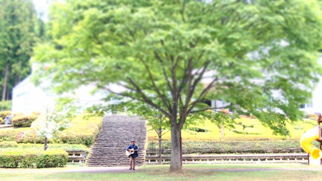 大きな木と証