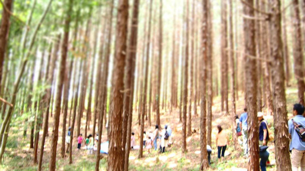 木立の行進