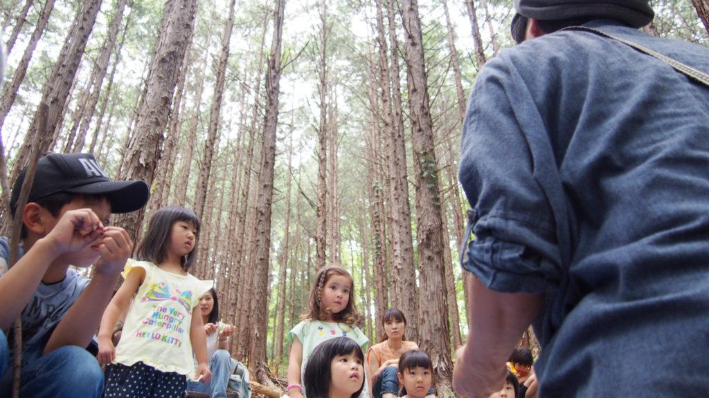 ヒノキの木立の美しさ