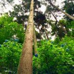 【下見レポ】アジサイと雨の美しさを知る★6/23(木)「森の歌会 アジサイ山の歌」@あきる野市