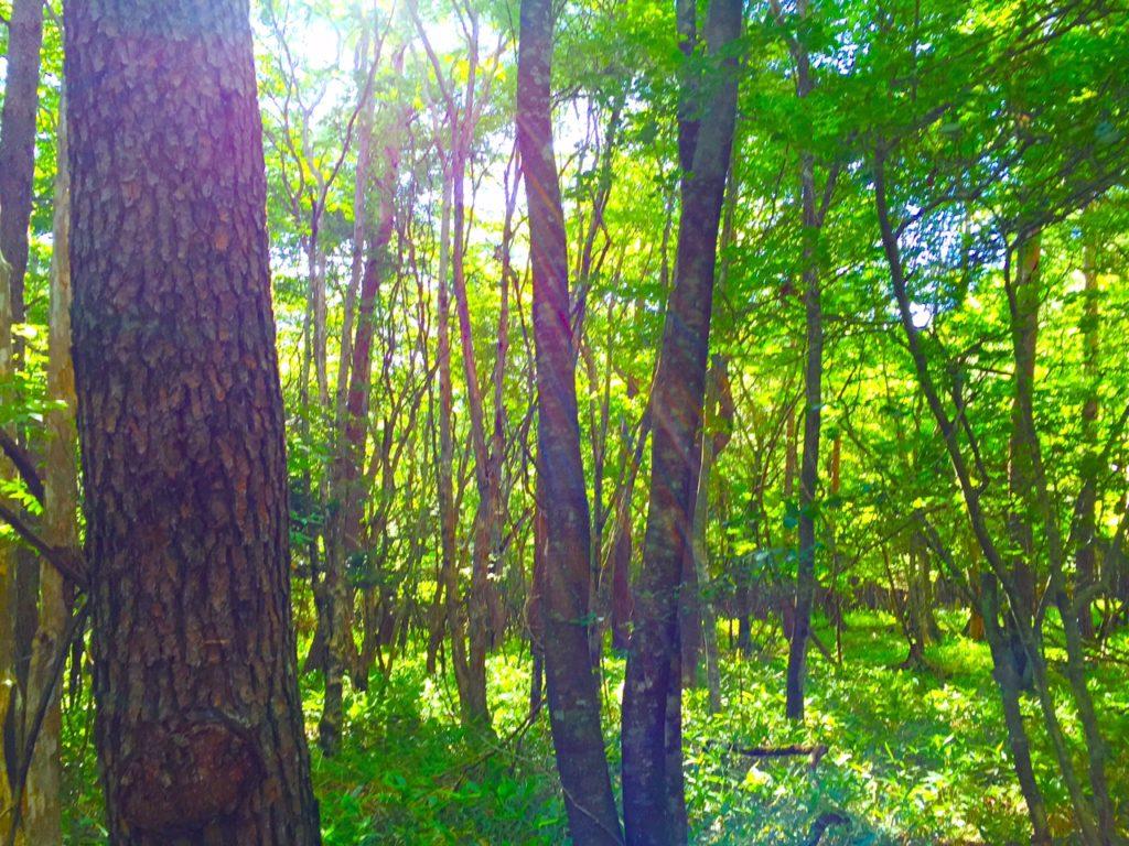 清里の森。