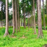 樹空の森1