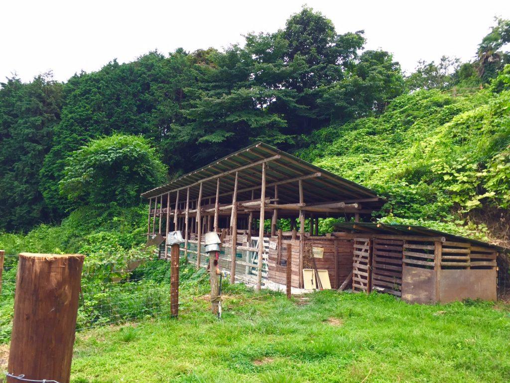 ヤギの飼育小屋。