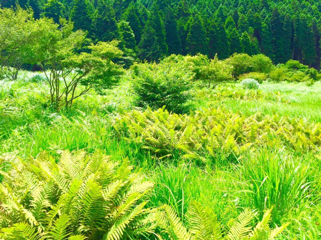 小田貫湿原2