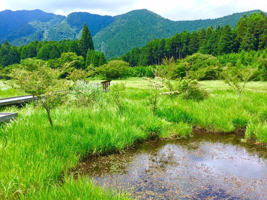 小田貫湿原4