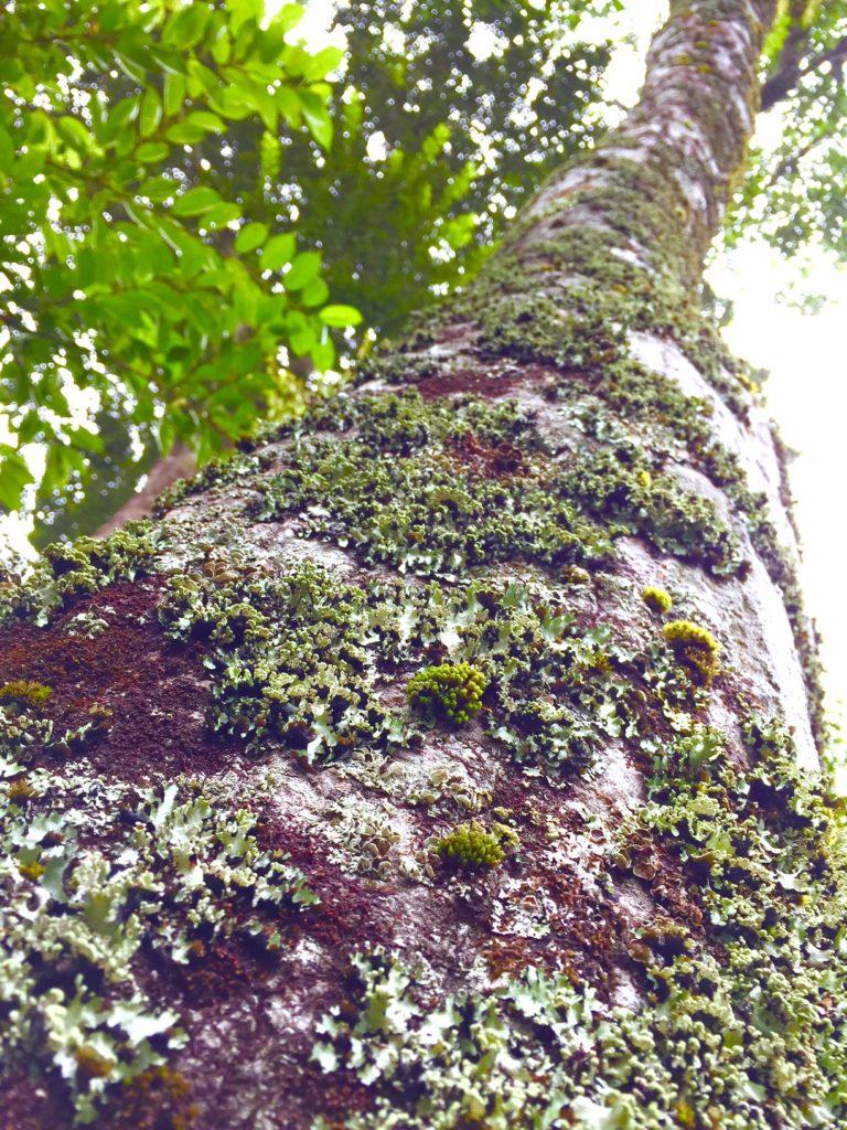 溶岩の森3