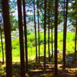 親子でできる間伐がある【山梨】★8/11(木)「皮むき間伐と森の歌会」南巨摩郡富士川町