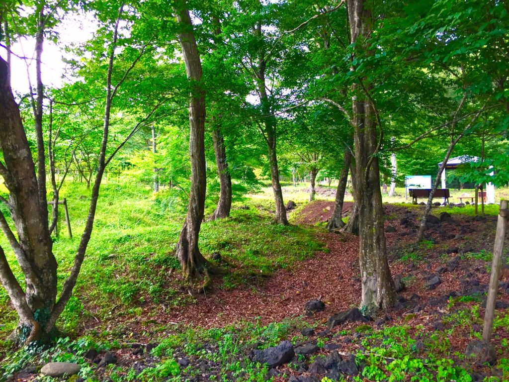 樹空の森2