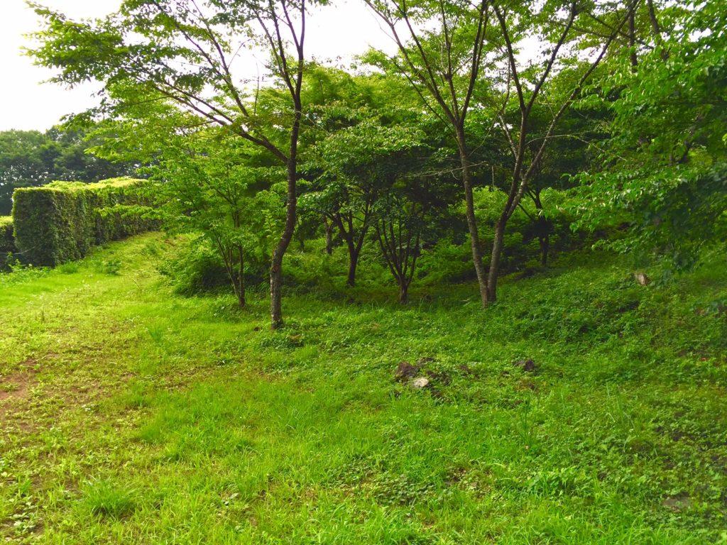 樹空の森3