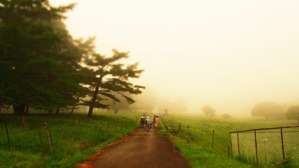 霧の中の一本の道1