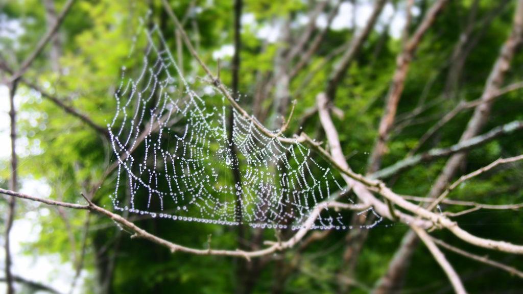 クモの巣。