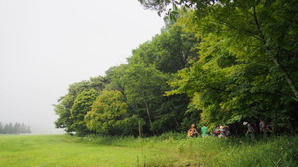 牧草地の横の道。