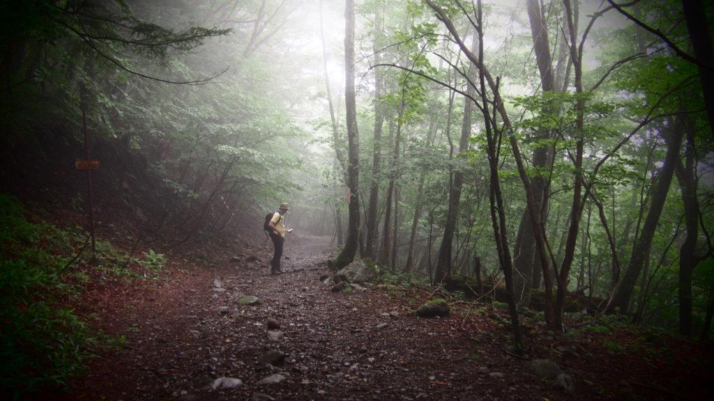 森に人は戻る。