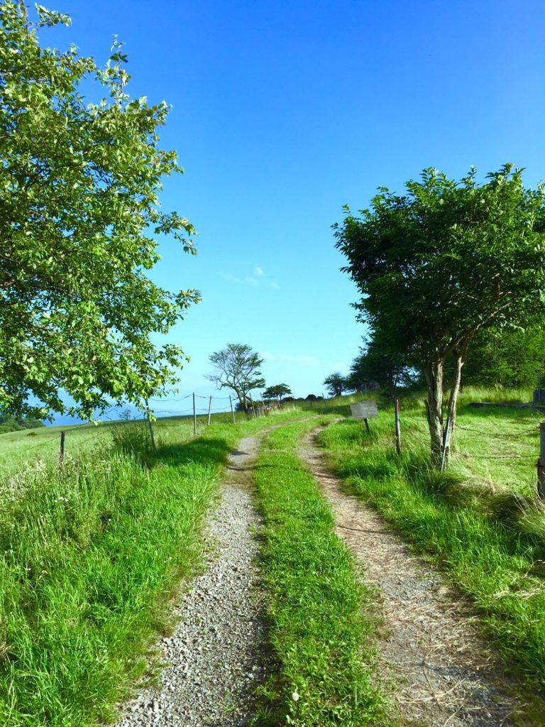 牧場の道3