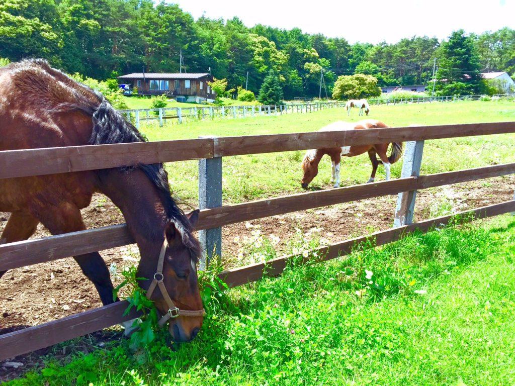 馬の牧場ありました!