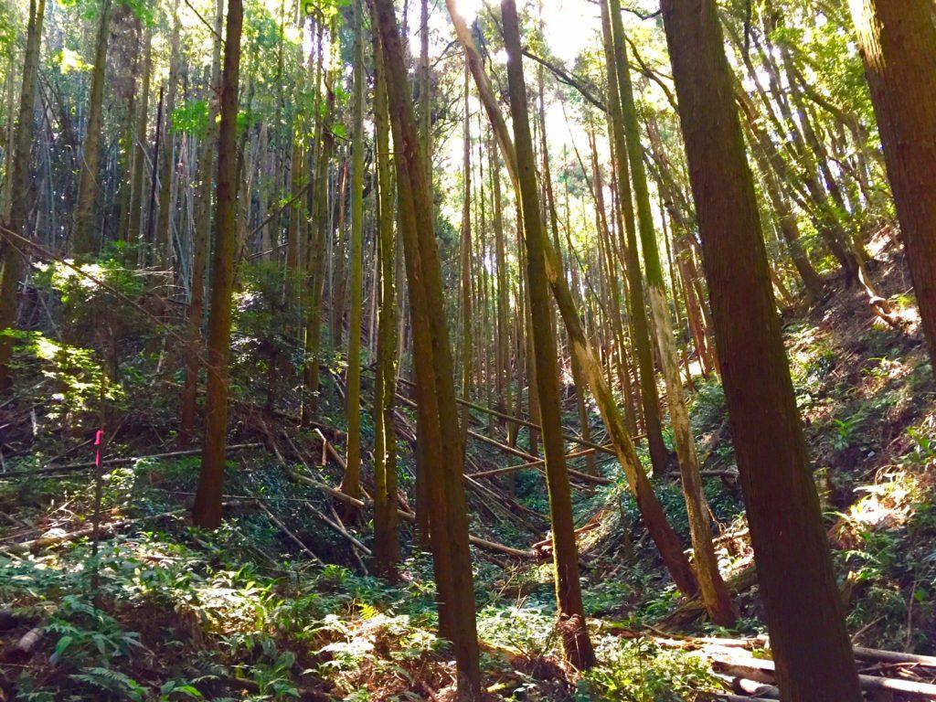 倒木の森。