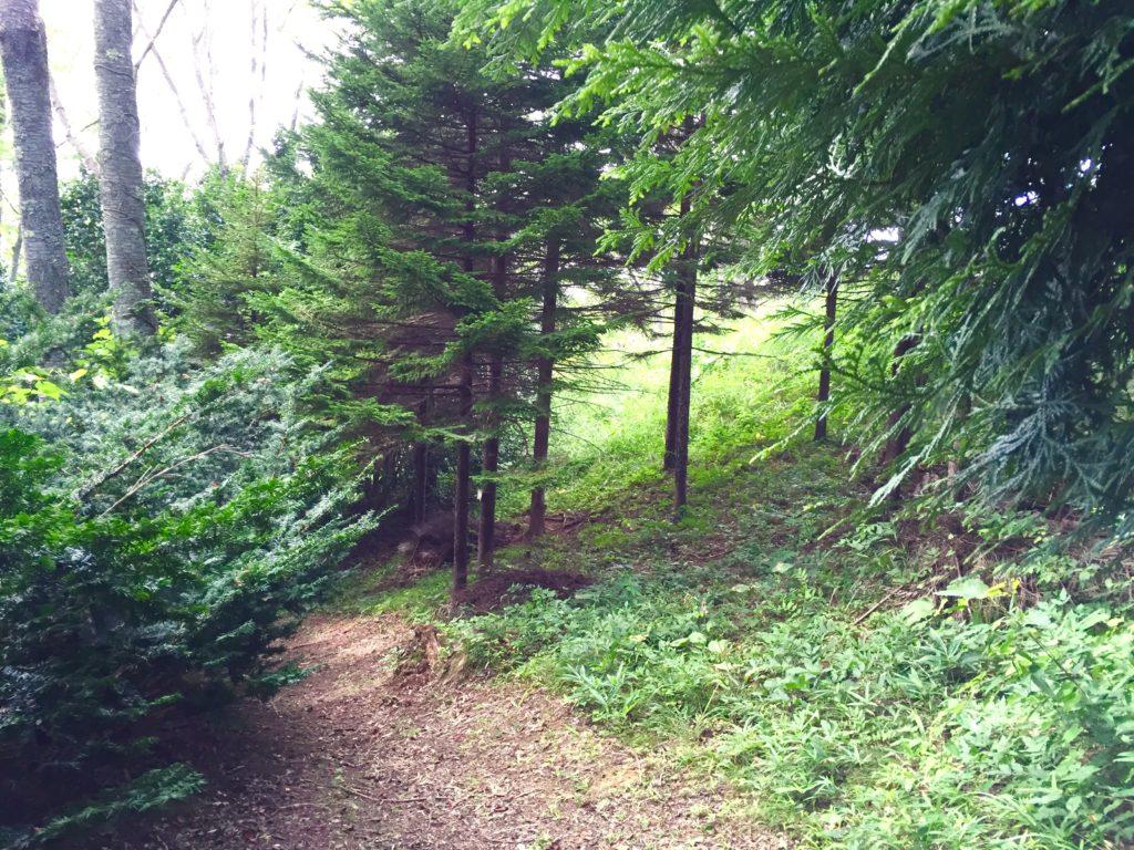 県木の森。
