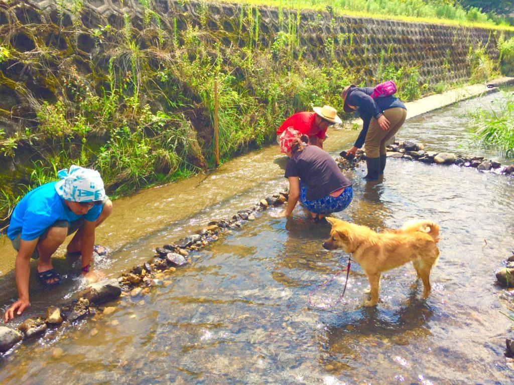 川で石運び。