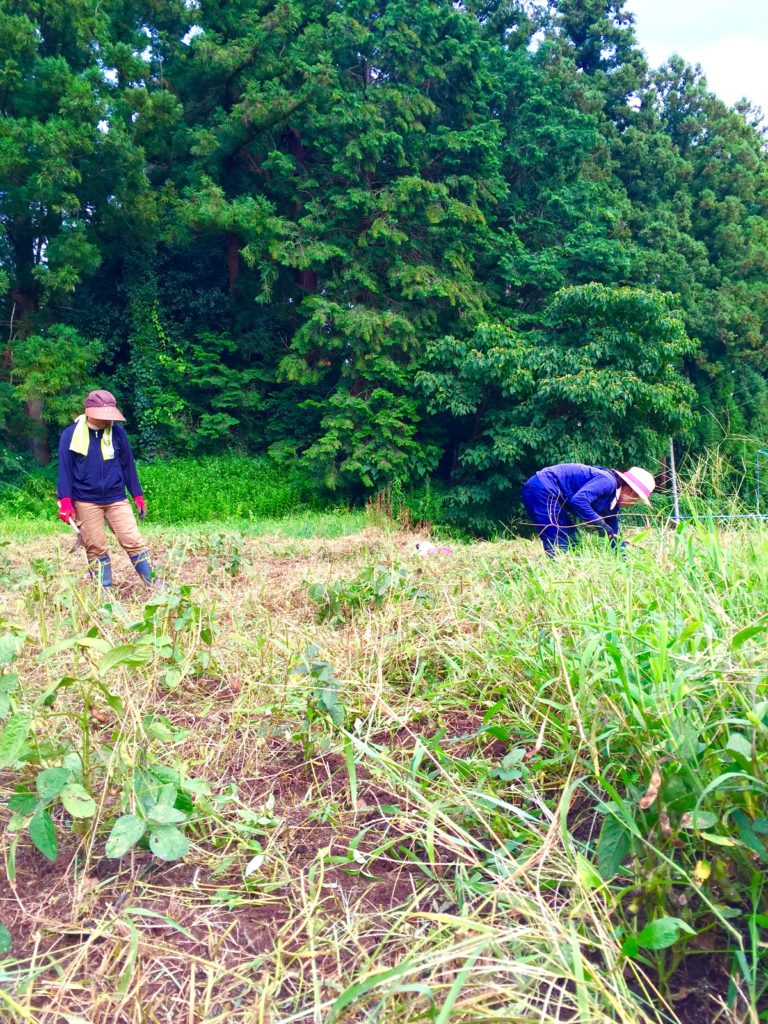 自然農法の畑2