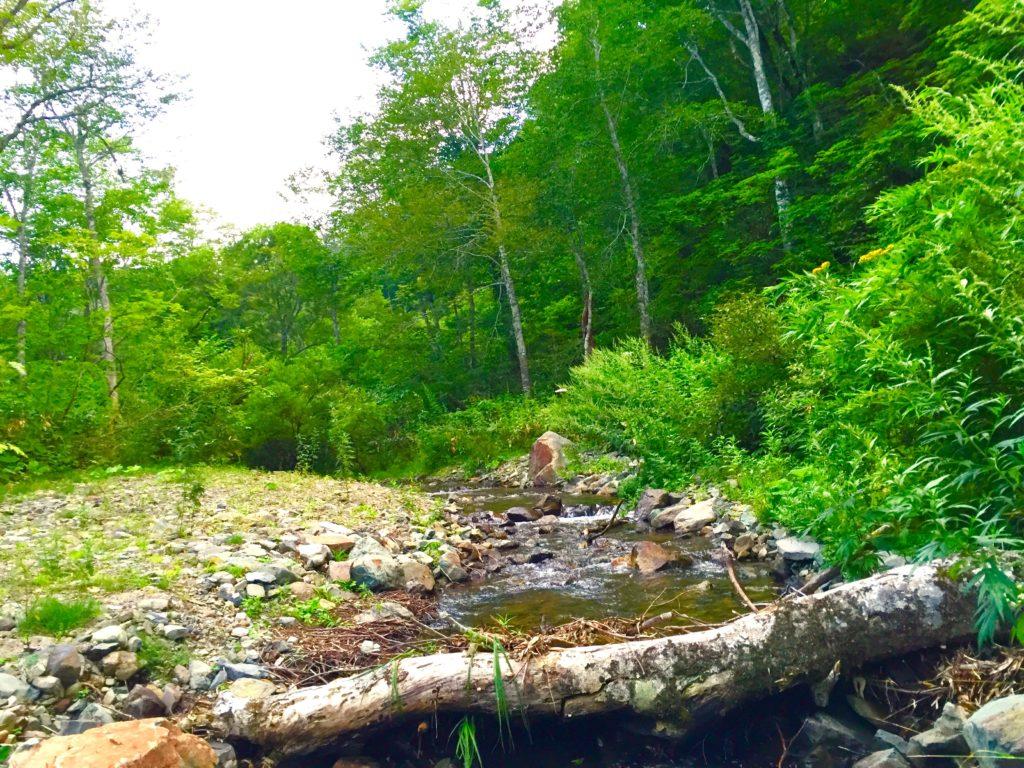 森林浴の道。
