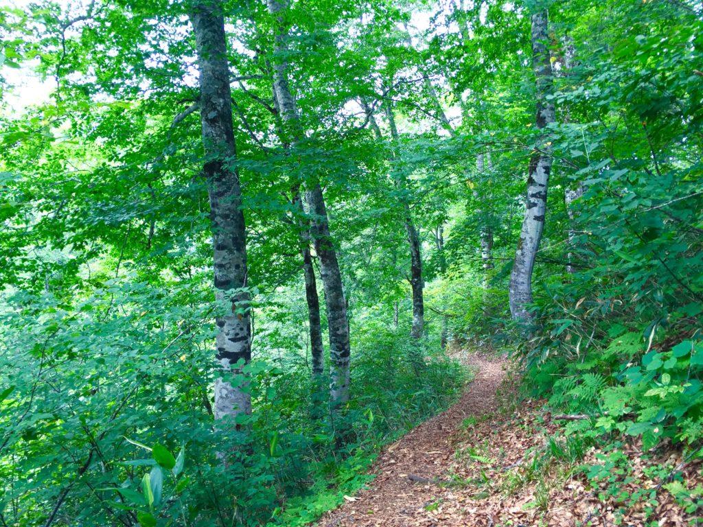 森林浴の道2