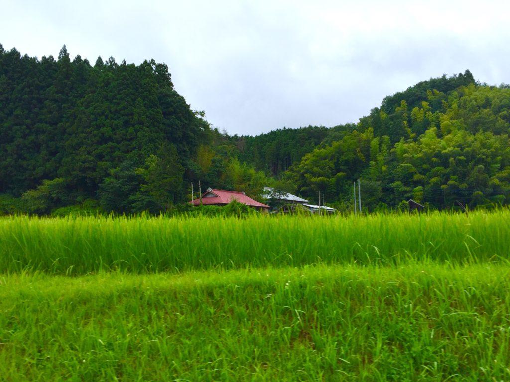 農村風景4