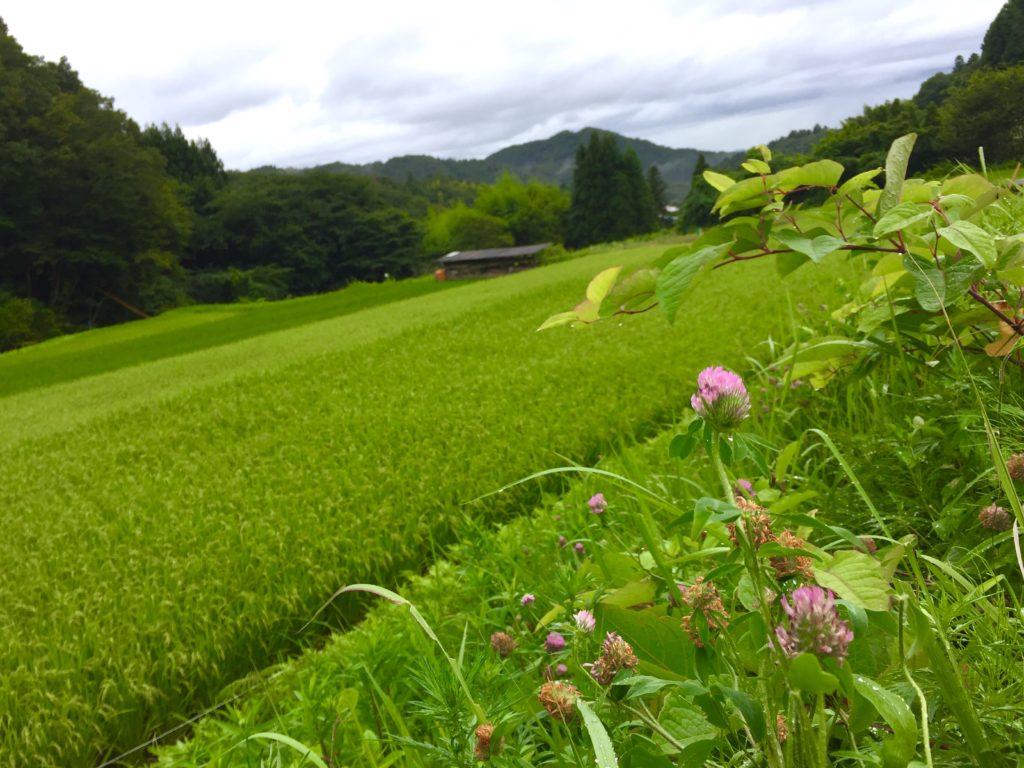 農村風景3