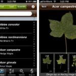 葉っぱから植物の種類を瞬時に特定できる無料アプリ「LeafSnap」がすごい!※Iphoneのみ