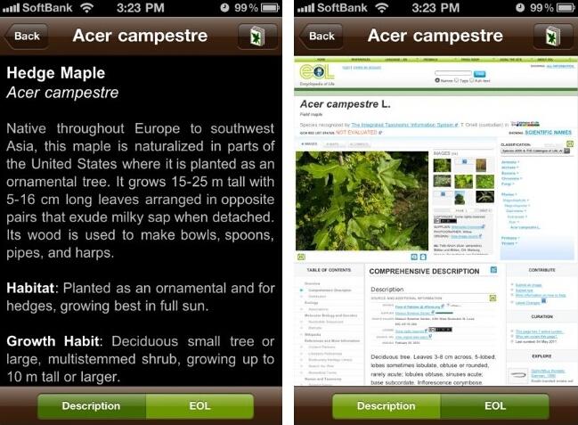 leafsnapディスクリプション画像