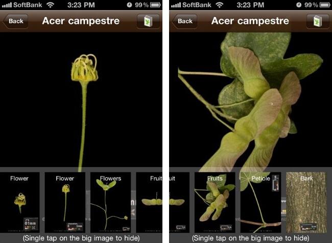 leafsnap花や種子などの詳細画像