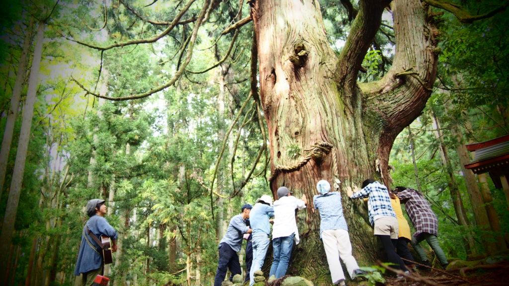 木に触れるプログラム。