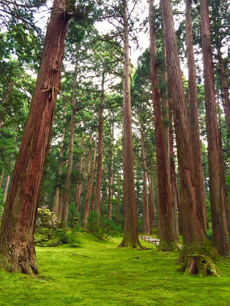 杉の中の慰霊碑。