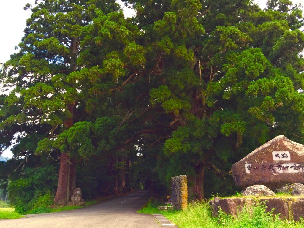 菩提林入口。