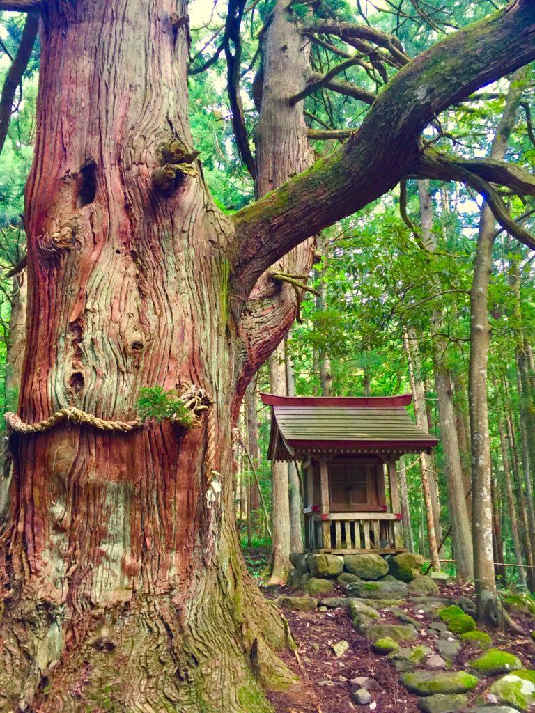 若宮神社2