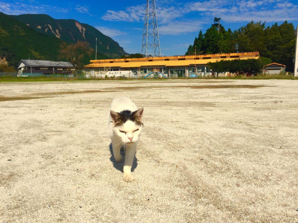 残ったネコ。