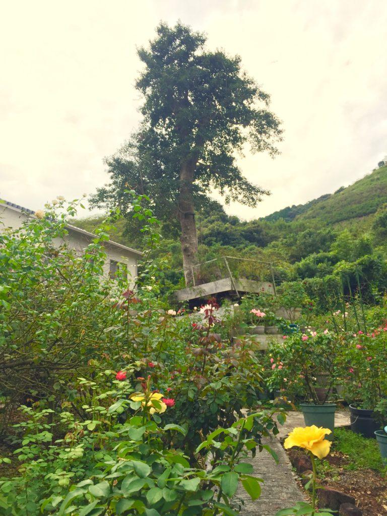 バラの庭園。
