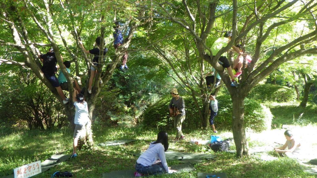 木に登って歌を聴く。