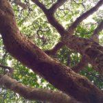 1000年続く日本で最後の原生林「雄島」@福井県坂井市