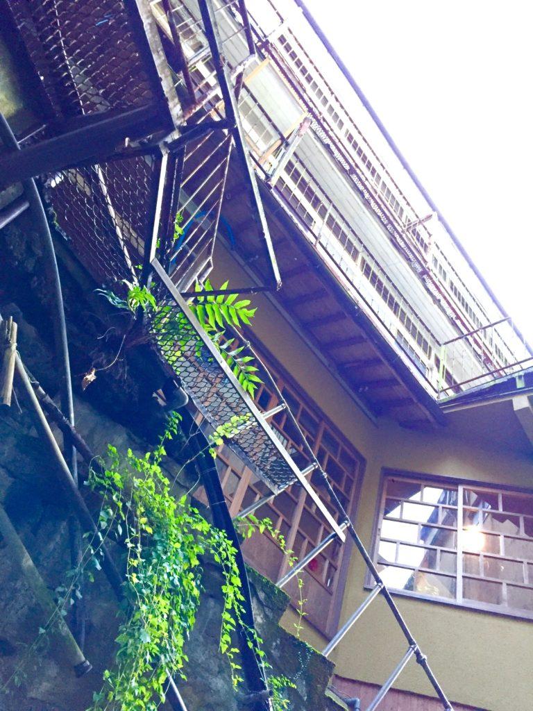 背戸屋から見上げる。