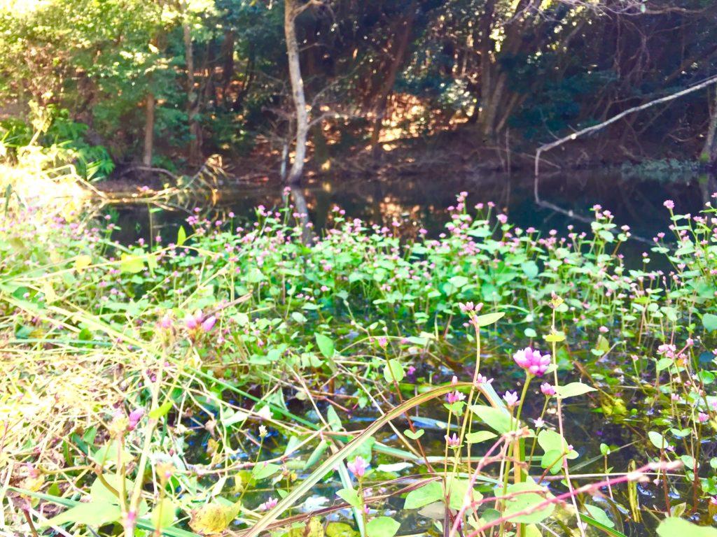 ウナギツカミの花。