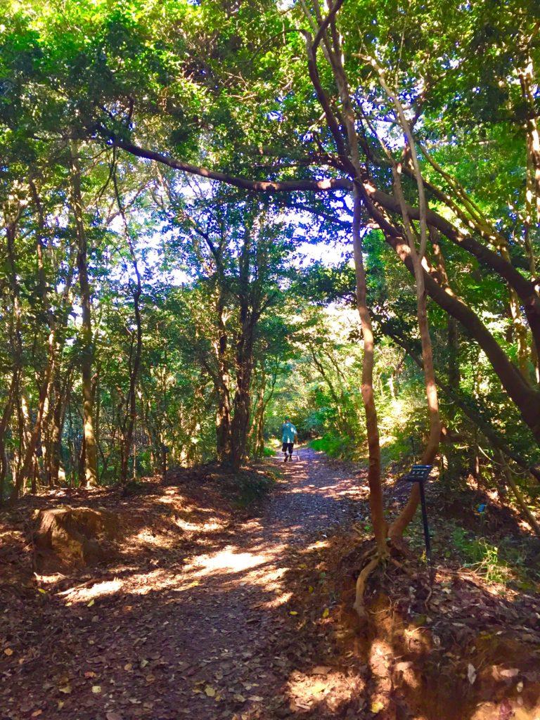 九大の森の道3
