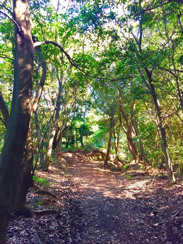 九大の森の道1